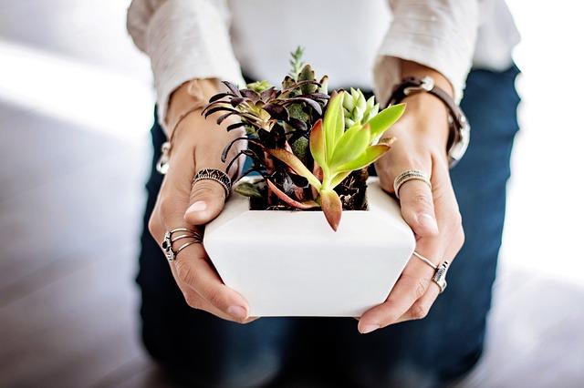 Conheça plantas e ervas que podem servir de repelente natural em sua casa