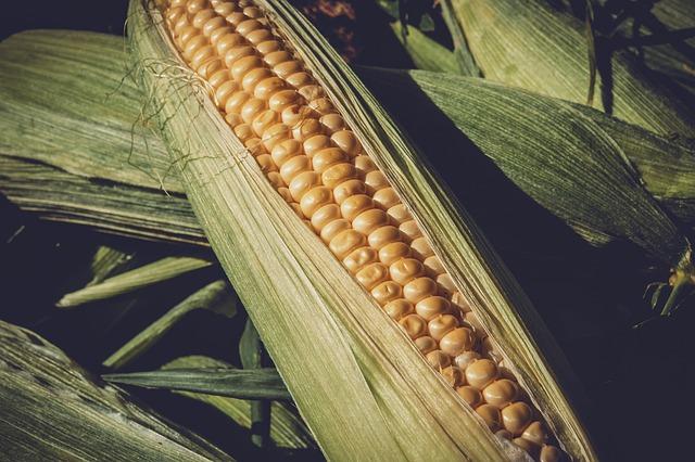 Fatores que estão influenciando a queda do milho 2018